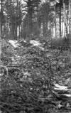 Wendell State Forest Deforestation - image 6